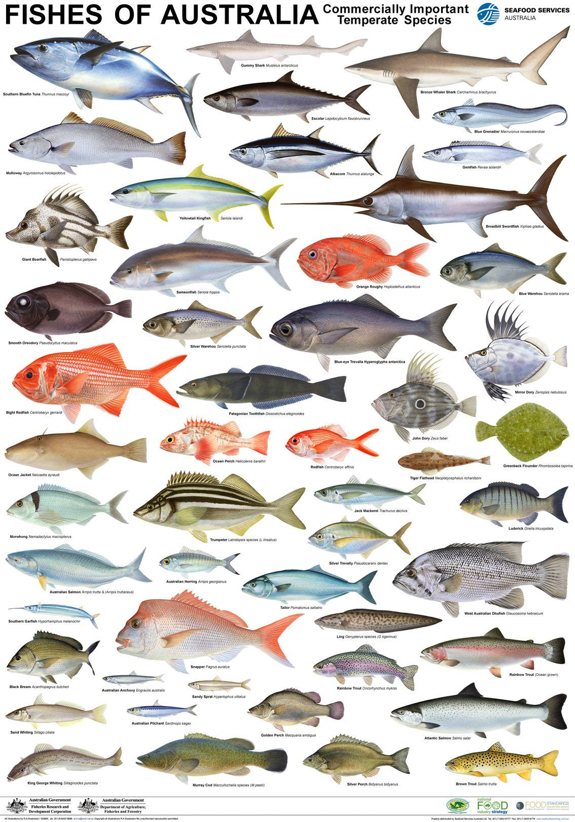 Seafood posters mfma for Names of fish