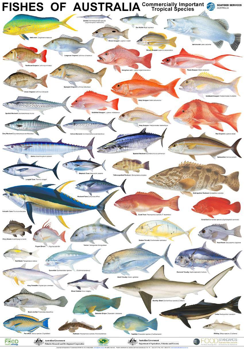Seafood posters mfma for Hawaiian fish names